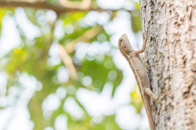 Gros plan d'un caméléon thaïlandais sur l'arbre.