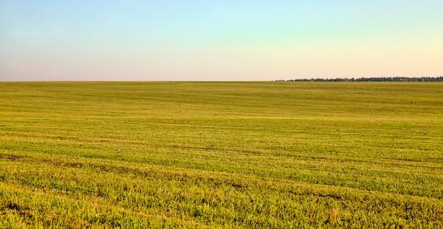 Gros plan sur le champ agricole