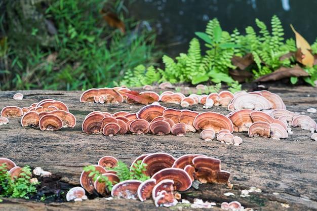Gros plan, de, champignon, sur, bois, bois