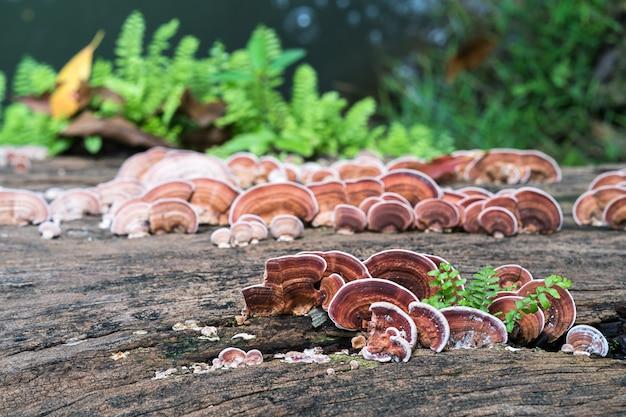 Gros plan, champignon, sur, bois