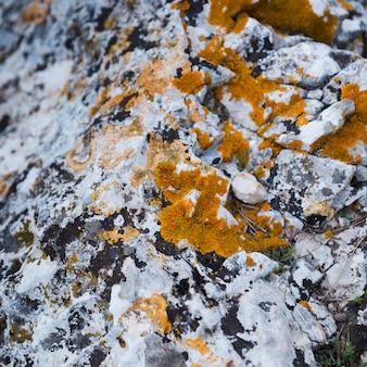 Gros plan, champignon, à, mousse, sur, a vieilli, rocher