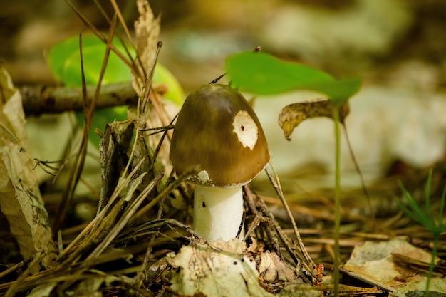 Gros plan d'un champignon