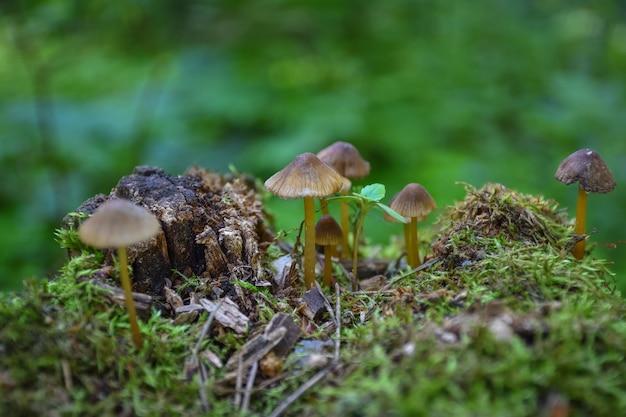 - gros plan de champignons sur une souche d'arbre