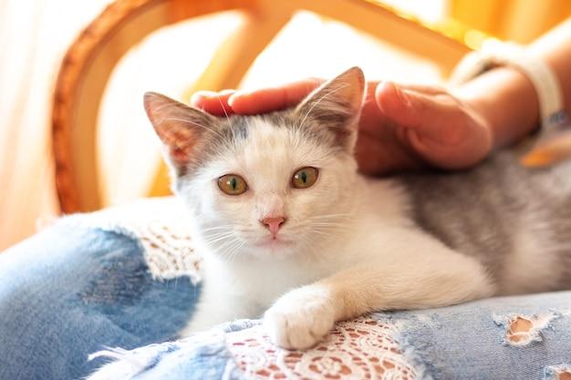 Gros plan sur le chat assis sur les genoux du propriétaire