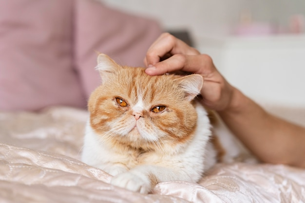 Gros plan chat caressant la main