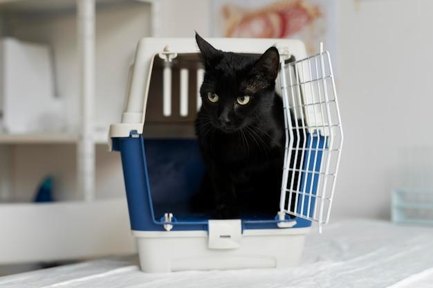 Gros plan sur un chat à la clinique vétérinaire