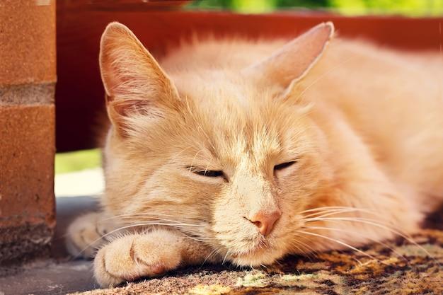 Gros plan, chat, dormir