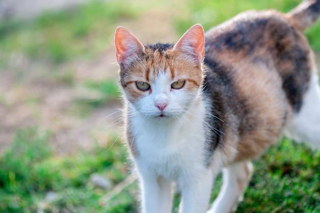 Gros plan d'un chat errant marchant dans le jardin