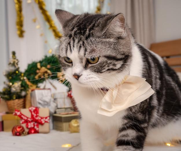 Gros plan d'un chat mignon avec des ornements de noël derrière