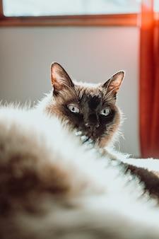 Gros plan sur le chat surpris à l'intérieur