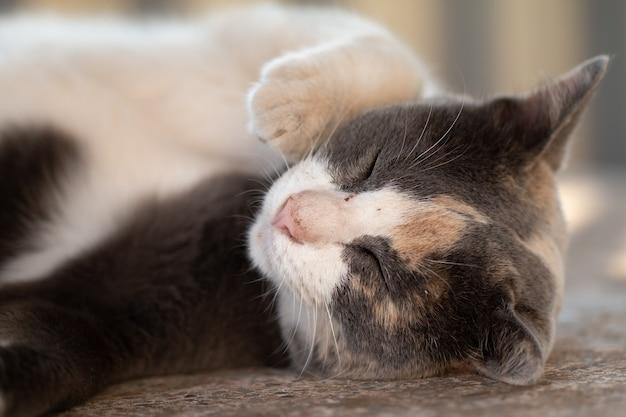 Gros plan chat tigré gris rester sur le sol.