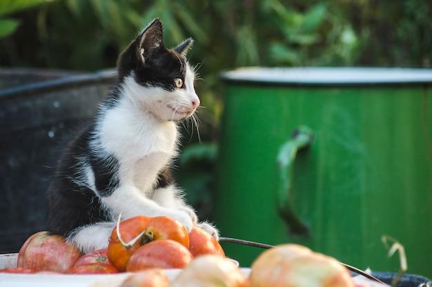 Gros plan d'un chaton mignon jouant dans la cour avec des légumes