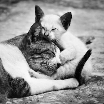 Gros plan de chats