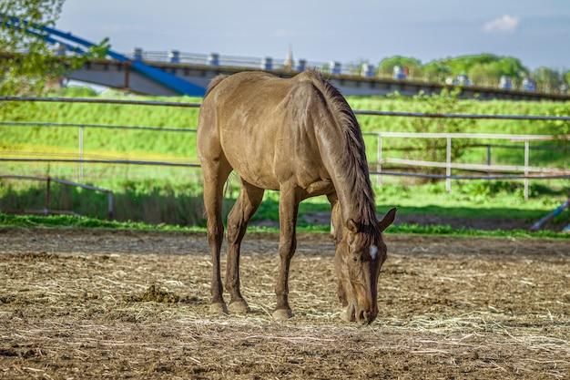 Gros plan d'un cheval brun mange de l'herbe avec de la verdure