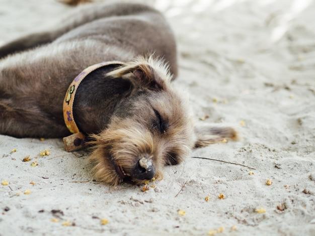Gros plan de chien dormir sur la plage