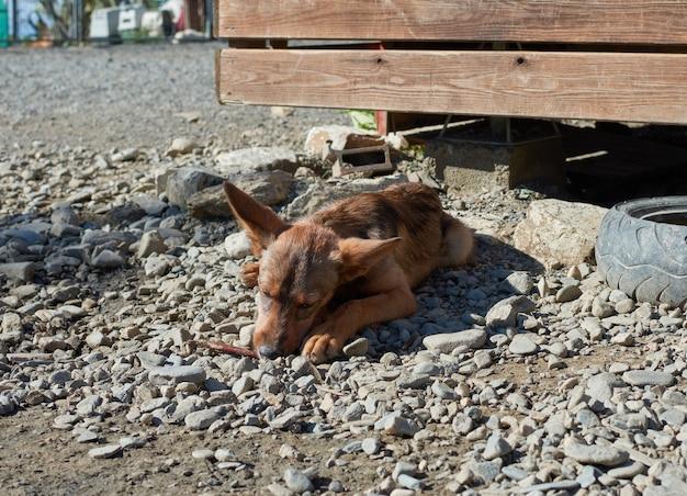 Un gros plan d'un chien errant couché sur un sol graveleux