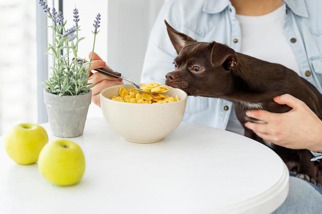 Gros plan chien reniflant des céréales