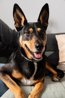 Gros plan de chien souriant sur canapé