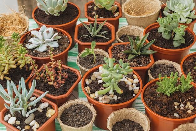 Gros plan de la collection de plantes succulentes à la maison sur une table en bois