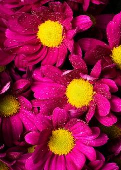 Gros plan, coloré, ressort, fleurs