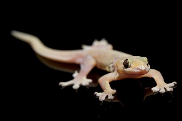 Gros plan, commun, maison, gecko