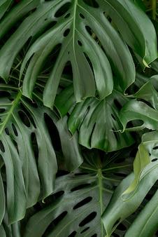 Gros plan concept botanique vif