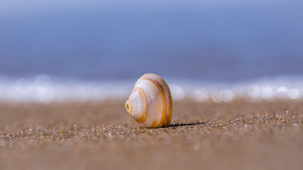 Gros plan de coquillage sur le sable