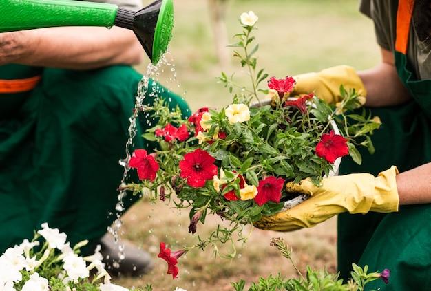 Gros plan, couple, arroser, fleurs