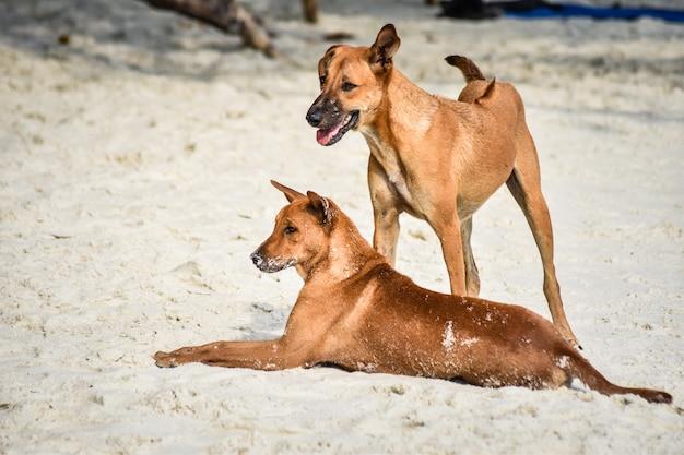 Gros plan d'un couple chien de plage jouant sur la plage