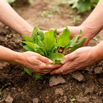 Gros plan, couple, récolte, dans, jardin