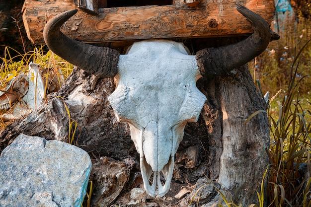 Gros plan d'un crâne de vache blanche avec des cornes sur une souche en bois