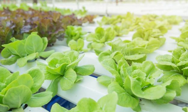 Gros plan dans le jardin potager pendant le concept de fond nourriture heure du matin avec espace de copie
