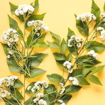 Gros plan de délicates fleurs blanches sur fond jaune