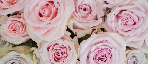Gros plan de délicates fleurs roses