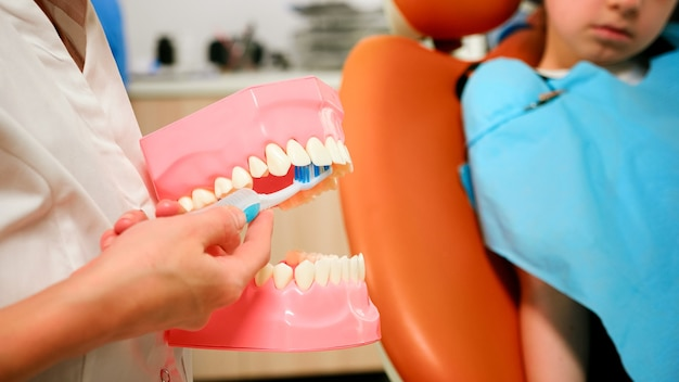 Gros plan sur un dentiste démontrant un brossage professionnel des dents avec une brosse à dents, des mouvements qui aident à garder vos dents en bonne santé. orthodontiste spécialiste tenant la mâchoire dentaire parlant avec le patient