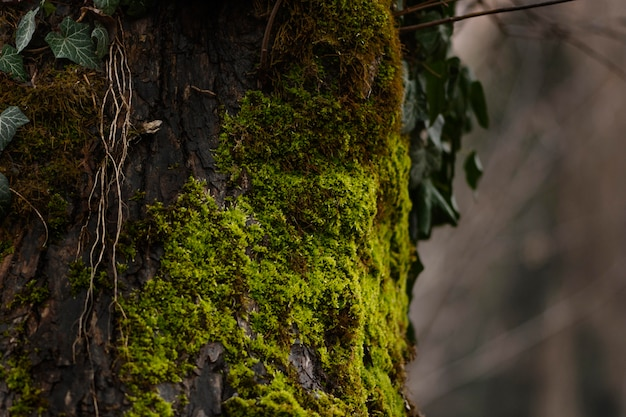 Gros plan, détail, de, forêt sauvage