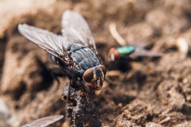 Gros plan détaillé d'une mouche domestique sur une surface texturée
