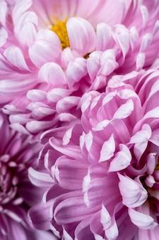 Gros plan détaillé de pétales violets
