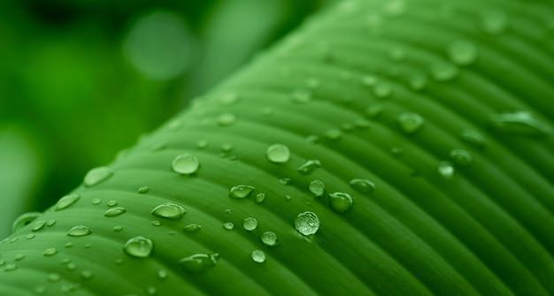 Gros plan sur les détails des feuilles de bananier de fond abstrait