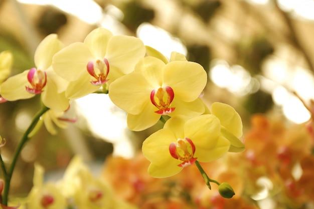 Gros plan du bouquet d'orchidées avec fond naturel