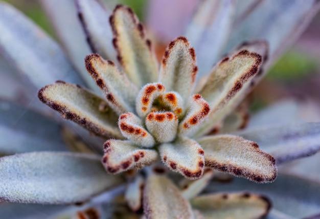 Un gros plan du cactus