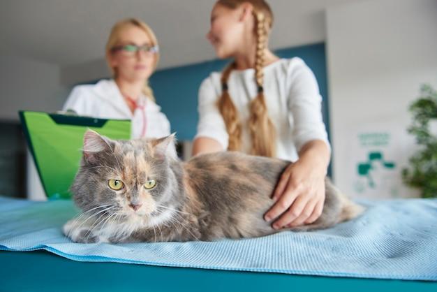 Gros plan du chat chez le vétérinaire