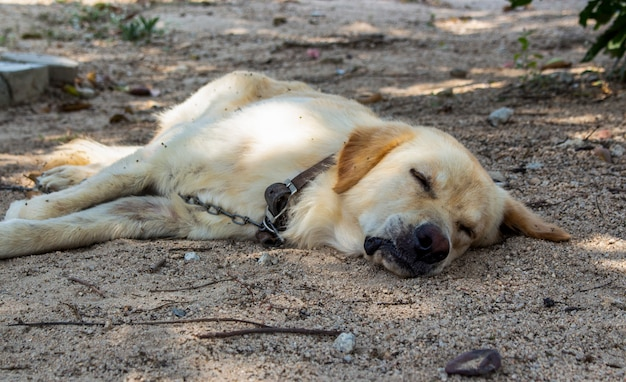 Gros plan du chien dort sur le sol dans le jardin.
