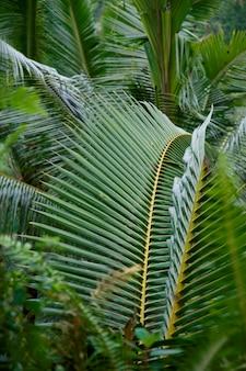 Gros plan du feuillage des feuilles à bali