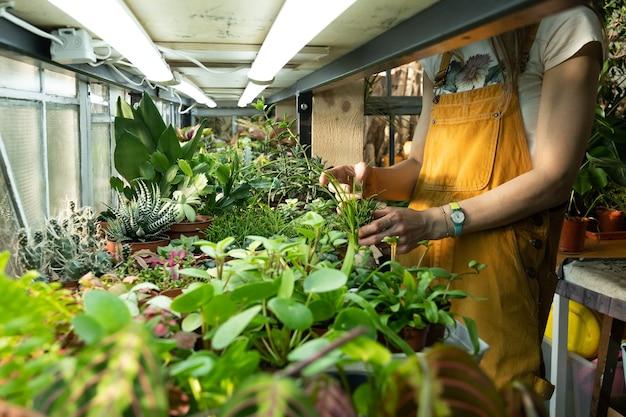 Gros plan du fleuriste féminin s'occupant de la pépinière