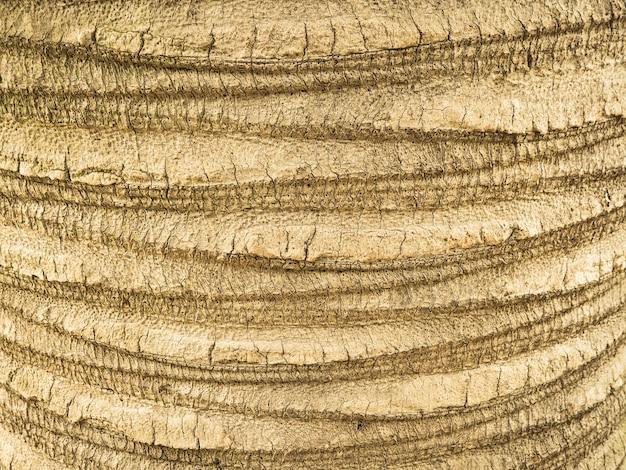 Gros plan du fond d'écorce de palmier brun. texture tropicale naturelle