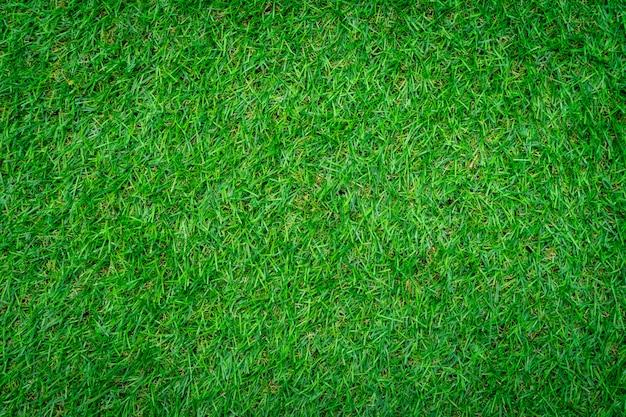 Gros plan du fond d'herbe verte.