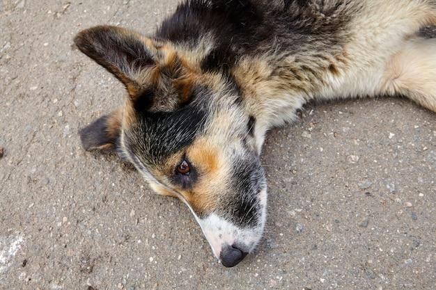 Gros plan du museau de chien bâtard couché sur le côté de la route.