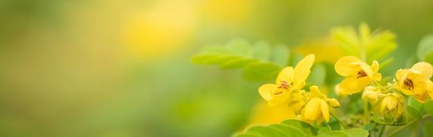 Gros plan du pollen de fleur jaune sous la lumière du soleil avec copie espace
