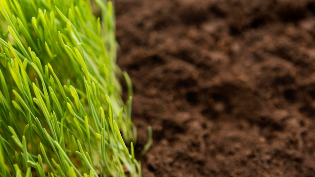 Gros plan du sol naturel et de l'herbe